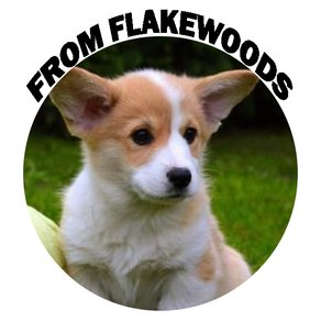 From Flakewoods Welsh Corgi Pembroke